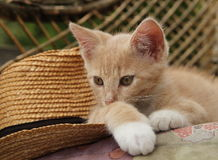 RED KITTEN AND STRAW HAT ON THE BENCH Stock Photo