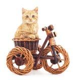 Red kitten on toy bike. Stock Photo