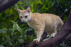 Red kitten on a tree branch with greenery. Domestic pet traveling in garden Stock Images
