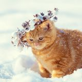 Red kitten wearing Christmas wreath stock photography