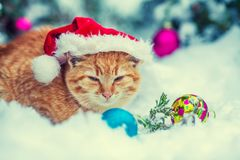 Red kitten, wearing Santa hat Stock Photography