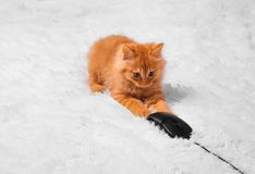 Red kitten on a white background plays looks lies stock photos