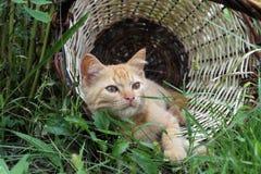 Red kitten in a wicker basket. Ginger kitten lying in a wicker basket on the green grass Stock Photo