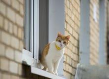 Red kitten on window Stock Photos