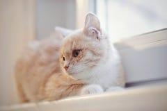 Red kitten on the windowsill Royalty Free Stock Photos