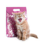 Red kitten yawns  of the gift bag Royalty Free Stock Photos