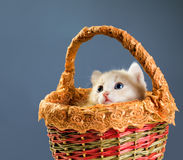Red kittens in basket Royalty Free Stock Images