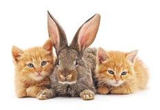 Red kittens and bunny. Red kittens and bunny on a white background stock photography