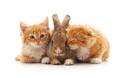 Red kittens and bunny. Red kittens and bunny on a white background royalty free stock photos