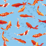 Red koi fishes in the pond Royalty Free Stock Photo