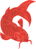 Red Koi Nishikigoi Carp Fish Drawing. Drawing sketch style illustration of a red koi nishikigoi trout fish set on isolated white background Stock Image