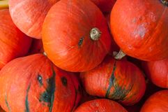 Red kuri hokkaido squash pumpkin background stock photos