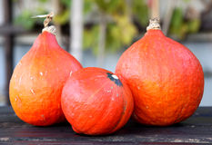 Red kuri squash. Is orange colored winter squash Stock Photos
