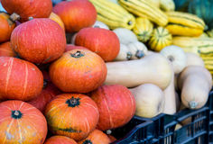 Red Kuri Squash. A bin filled with Red Kuri Squash at a Fall farmer's market in San Francisco. Butternut and delicate in the background Royalty Free Stock Photos