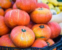 Red Kuri Squash. A bin filled with Red Kuri Squash at a Fall farmer's market in San Francisco. Butternut and delicate in the background Royalty Free Stock Photo