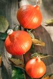 Red kuri squash hokkaido. Three Red kuri squash on a wooden board outdoor Stock Image