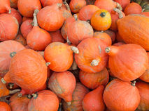 Red kuri squash Stock Image
