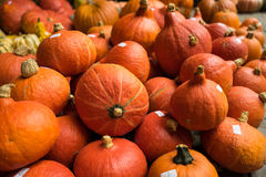 Red Kuri Squash for Sale Stock Images