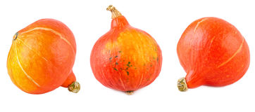Red Kuri Squash Set Collection Hokkaido Pumpkin Isolated on White Stock Images
