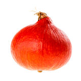 Red Kuri Squash Royalty Free Stock Image