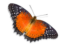Red Lacewing butterfly Stock Images