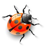 Red ladybird. Illustration, isolated on white background Royalty Free Stock Photography
