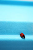 Red ladybird. A red ladybird on blue Royalty Free Stock Image