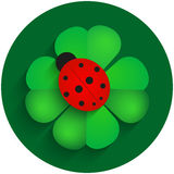 Red ladybird on green clover with shadow Royalty Free Stock Photo