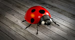 Red, Ladybird, Insect, Beetle Royalty Free Stock Photos