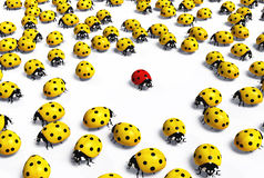 Red ladybird is marginalized Royalty Free Stock Photos