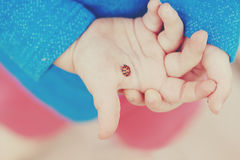 Red ladybird standing in child palm hands arms Royalty Free Stock Images