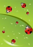 Red Ladybirds. Beautiful red Ladybirds on a green leaf Vector Illustration
