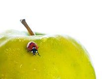 Red ladybug. Stock Image