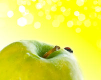 Red ladybug. Stock Photos