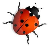 Red ladybug. On white Stock Image