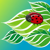 Red Ladybug Character Smiling Stock Photography