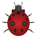 Red Ladybug Color Vector Illustration Stock Image