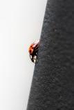 Red ladybug descending a metal bridge Royalty Free Stock Photography