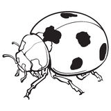 Red ladybug, ladybird with black spots, isolated sketch style illustration Royalty Free Stock Photo