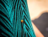 Red ladybug on a shirt Stock Photo