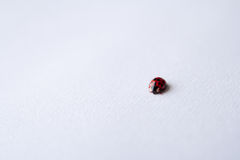 Red ladybug on white Royalty Free Stock Image