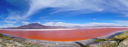 Red Lagoon Red Lake with Flamingos in Bolivia royalty free stock images