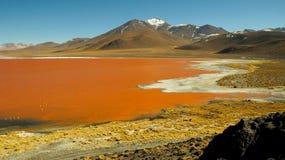Red Lake at Salar de Uyuni. Red Lagoon at Salar de Uyuni stock photography