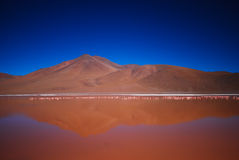 Red lake in altiplanic Bolivia Royalty Free Stock Image