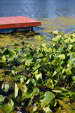 Red Lake Dock and Lilies Royalty Free Stock Image