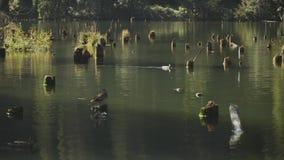 The Red Lake of Romania .Beautiful Lake Nature,slow motion