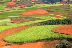 Red Land. In Dongchuan, Yunan, Western China , 2012 Stock Photo