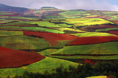Red land Stock Image