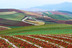 Red land stock photography