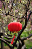 Red lantern. Hanging branches in spring Stock Photos